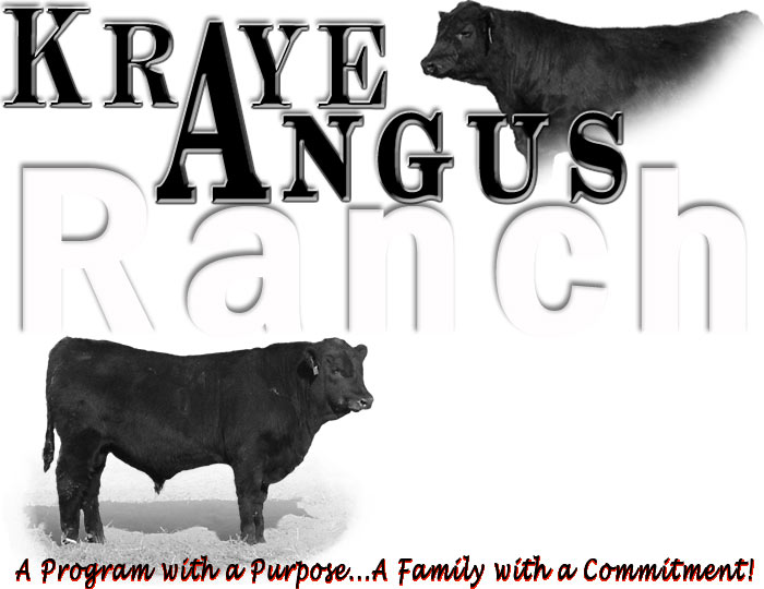 Kraye Angus Ranch Premium Angus Bulls and Bull Sale